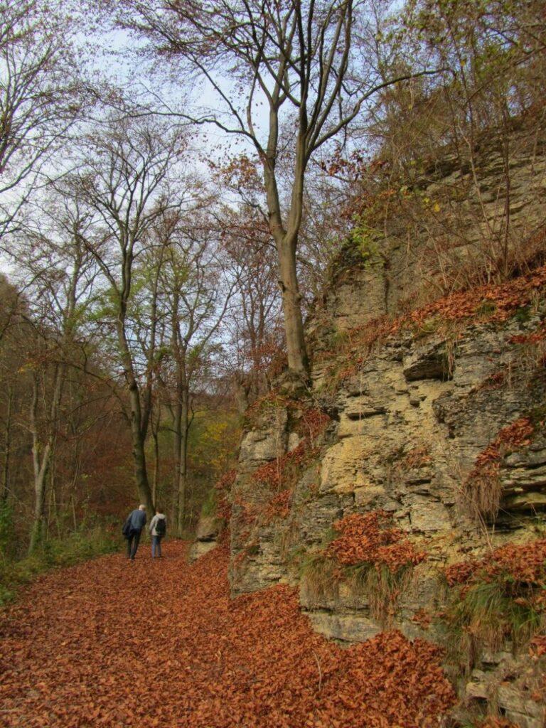 20 Brunsbergwanderungen 09